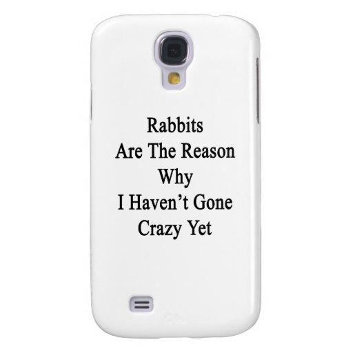 Los conejos son la razón por la que no tengo YE lo