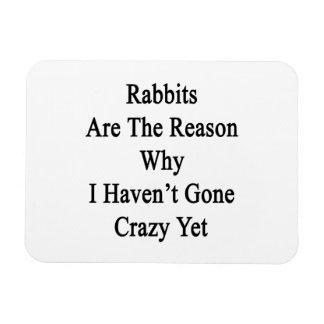 Los conejos son la razón por la que no tengo YE lo Imán