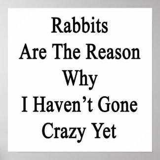 Los conejos son la razón por la que no tengo YE lo Impresiones