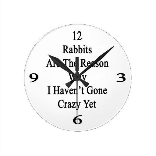 Los conejos son la razón por la que no tengo YE lo Reloj