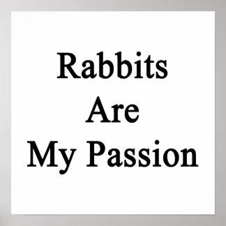Los conejos son mi pasión poster