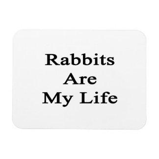 Los conejos son mi vida imán