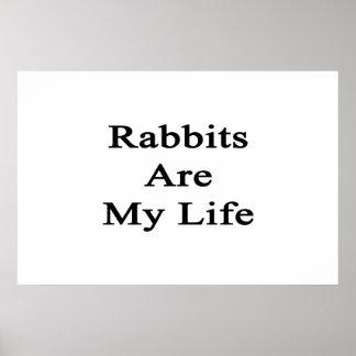Los conejos son mi vida posters