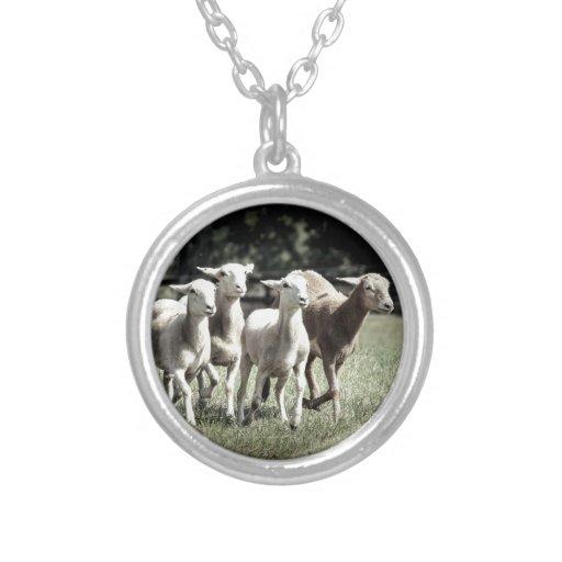 Los corderos que se divertían esquilaron diseño de grimpola