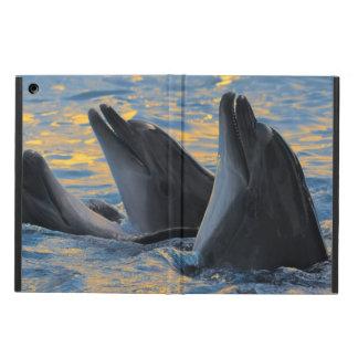 Los delfínes botella-sospechados en luz de la pues