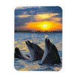 Los delfínes botella-sospechados en luz de la pues imanes flexibles