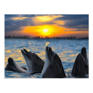 Los delfínes botella-sospechados en luz de la pues postal