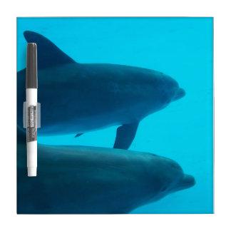 Los delfínes en azul secan al tablero del borrado pizarra blanca