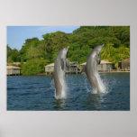 Los delfínes que saltan, Roatan, islas de la bahía Impresiones