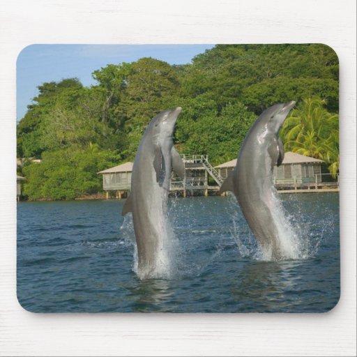 Los delfínes que saltan, Roatan, islas de la bahía Tapete De Ratón