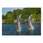 Los delfínes que saltan, Roatan, islas de la bahía Tarjeta De Felicitación