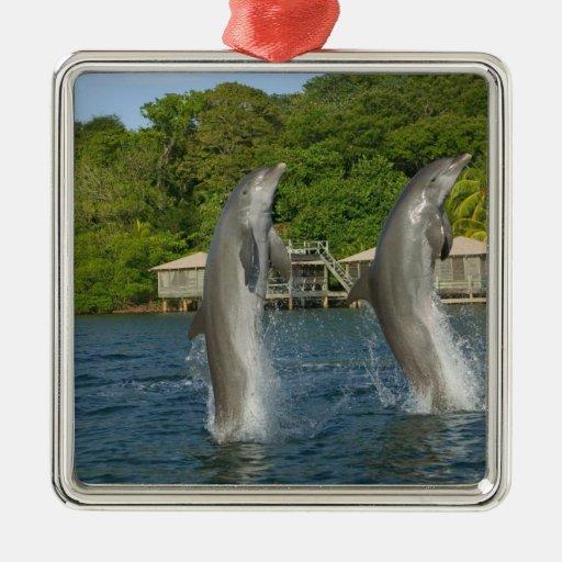 Los delfínes que saltan, Roatan, islas de la Ornatos