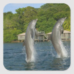 Los delfínes que saltan, Roatan, islas de la Pegatina Cuadrada