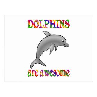 Los delfínes son impresionantes postal
