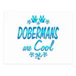 Los Dobermans son frescos Postal