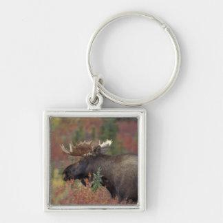 Los E.E.U.U., Alaska, alce de Bull del parque naci Llavero Cuadrado Plateado