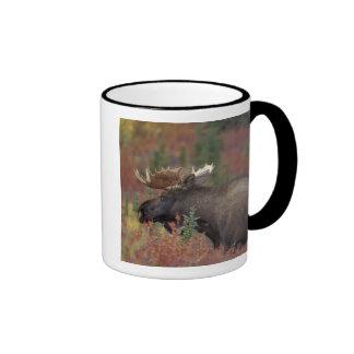 Los E.E.U.U., Alaska, alce de Bull del parque naci Taza A Dos Colores