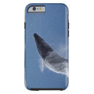 Los E.E.U.U., Alaska, Angoon, ballena jorobada Funda De iPhone 6 Tough