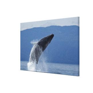 Los E.E.U.U., Alaska, Angoon, ballena jorobada Impresión De Lienzo