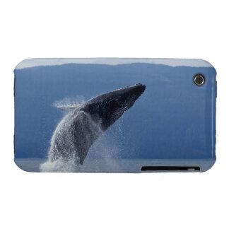 Los E.E.U.U., Alaska, Angoon, ballena jorobada (Me Case-Mate iPhone 3 Cárcasas