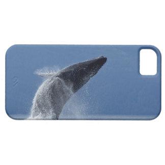 Los E.E.U.U., Alaska, Angoon, ballena jorobada (Me iPhone 5 Cárcasa