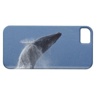 Los E.E.U.U., Alaska, Angoon, ballena jorobada (Me iPhone 5 Cárcasas