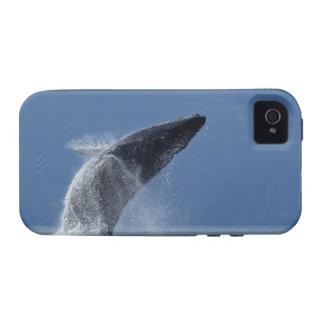 Los E.E.U.U., Alaska, Angoon, ballena jorobada (Me Vibe iPhone 4 Carcasa