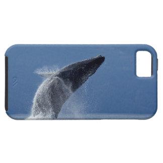 Los E.E.U.U., Alaska, Angoon, ballena jorobada (Me iPhone 5 Protectores
