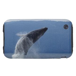 Los E.E.U.U., Alaska, Angoon, ballena jorobada (Me Tough iPhone 3 Cobertura