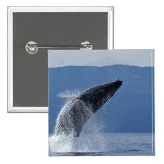 Los E.E.U.U., Alaska, Angoon, ballena jorobada (Me Pin Cuadrada 5 Cm