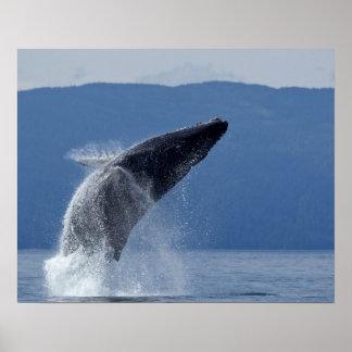 Los E.E.U.U., Alaska, Angoon, ballena jorobada Póster
