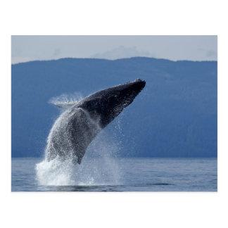 Los E.E.U.U., Alaska, Angoon, ballena jorobada Postal