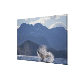 Los E.E.U.U., Alaska, Angoon, Megaptera 2 de la ba Lona Estirada Galerías
