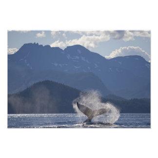 Los E.E.U.U., Alaska, Angoon, Megaptera 3 de la ba Fotografía
