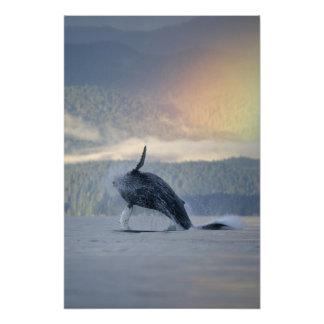 Los E.E.U.U., Alaska, Angoon, Megaptera de la ball Fotografías