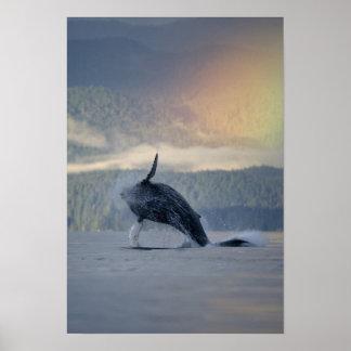 Los E.E.U.U., Alaska, Angoon, Megaptera de la ball Poster