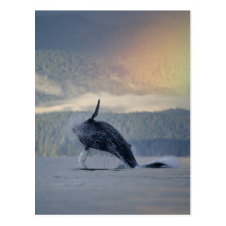 Los E.E.U.U., Alaska, Angoon, Megaptera de la Postal
