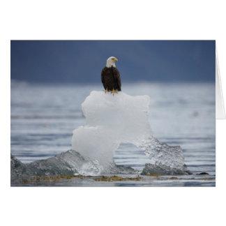 Los E.E.U.U., Alaska, bahía de Holkham, Eagle calv Tarjetón
