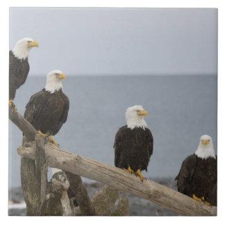 Los E.E.U.U., Alaska, bahía de Kachemak, escupitaj Azulejo Cuadrado Grande