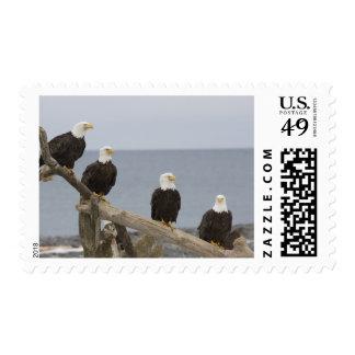 Los E.E.U.U., Alaska, bahía de Kachemak, Sello Postal