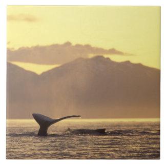 Los E.E.U.U., Alaska, ballena jorobada interior de Azulejo Cuadrado Grande