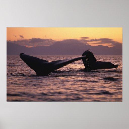 Los E.E.U.U., Alaska, ballenas jorobadas interiore Impresiones