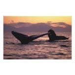 Los E.E.U.U., Alaska, ballenas jorobadas interiore Fotografia