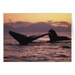 Los E.E.U.U., Alaska, ballenas jorobadas interiore Felicitación