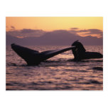 Los E.E.U.U., Alaska, ballenas jorobadas interiore Postales