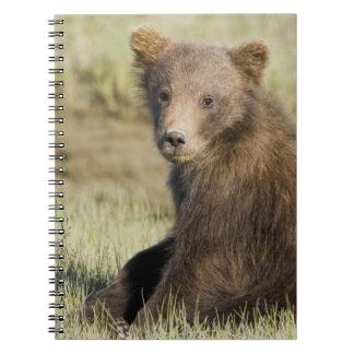 LOS E.E.U.U. Alaska. Cachorro de oso costero de Br Libretas