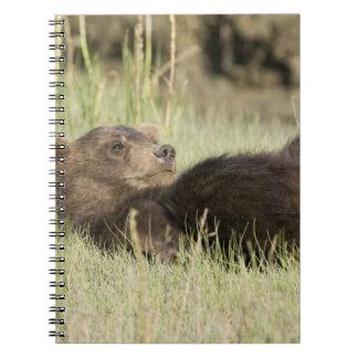 LOS E.E.U.U. Alaska. Cachorro de oso costero de Br Libro De Apuntes
