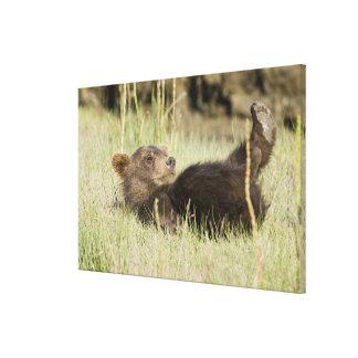 LOS E E U U Alaska Cachorro de oso costero de Br Impresión En Lona