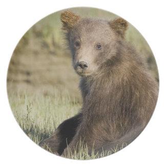 LOS E.E.U.U. Alaska. Cachorro de oso costero de Br Platos