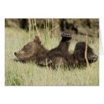 LOS E.E.U.U. Alaska. Cachorro de oso costero de Br Felicitacion